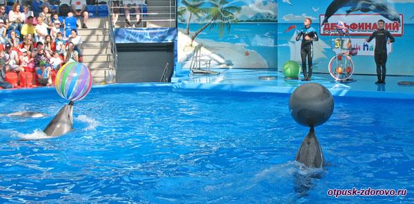 Выступление дельфинов, Сочи Парк