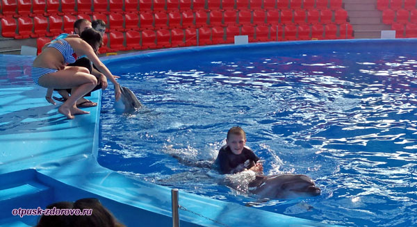 Плавание с дельфинами в дельфинарии Сочи Парка