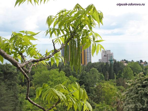 Цветущие деревья в парке Дендрарий в Сочи