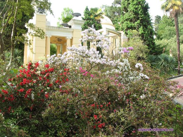 Беседка утопает в цветах, Дендрарий, Сочи