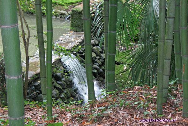 Водопад в бамбуковой роще, Дендрарий, Сочи