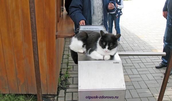 Кот охраняет турникет