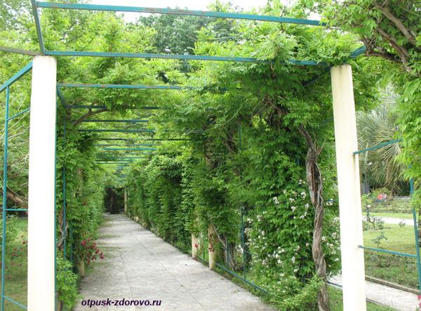 Зеленые арки в Нижнем парке сочинского дендрария