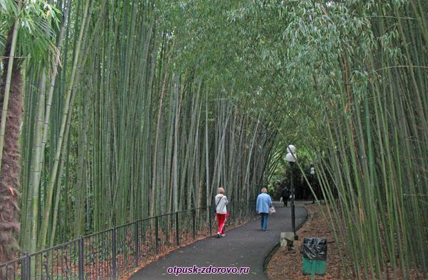 Бамбуковая роща в дендрарии, Сочи