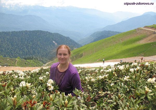 Белые цветы на вершине Роза Пик-2320 на фоне горных вершин и ледника