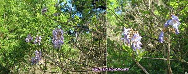 Цветущие деревья в каньоне Глубокий Яр