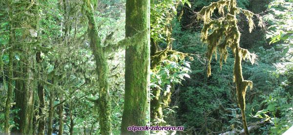 Сказочный лес по пути к Водопаду Пасть Дракона (Глубокий Яр)