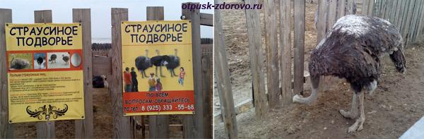 Новорижская пирамида Александра Голода, шоссе Новая Рига, страусиное подворье