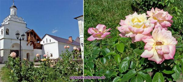 Территория, розы. Введенский Владычный женский монастырь, Серпухов