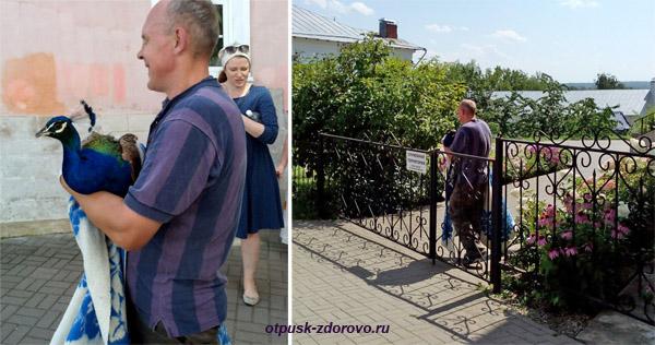 Павлин, Введенский Владычный женский монастырь, Серпухов