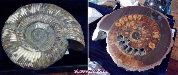 Раковина аммонита, Выставка камней, Историко-художественный музей, Серпухов