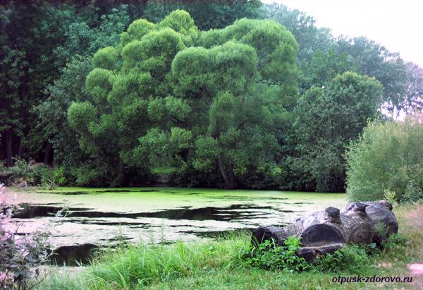 Усадьба Храповицкого в Муромцево, замок, пруды