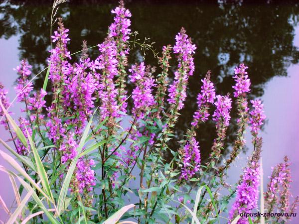 Судогодский гейзер, природный фонтан в Судогде, красивые цветы возле источника