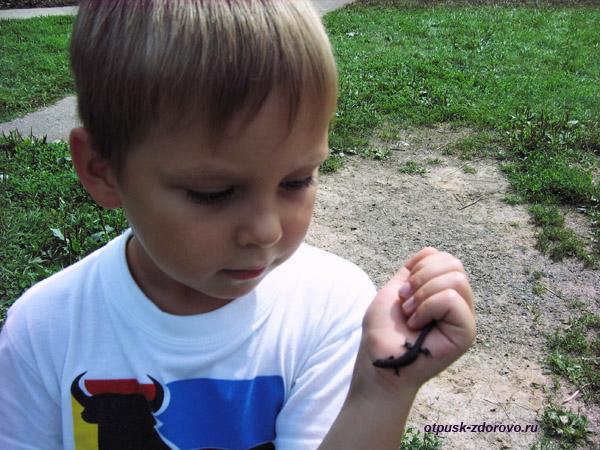 Поймали ящерицу возле Судогодского гейзера