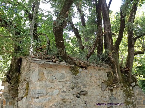 Деревья прорастают сквозь кровлю, храм святой Феодоры Васты