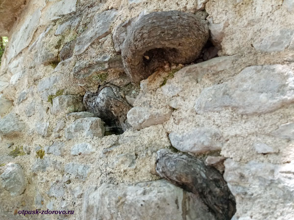 Корни деревьев прорастают через стены храма св. Феодоры, Пелопоннес