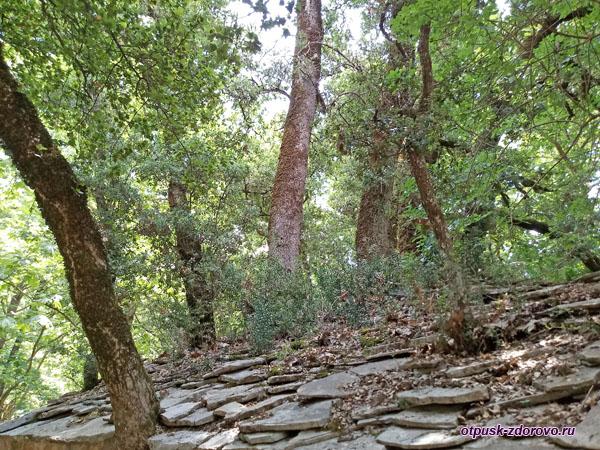 Деревья растут сквозь крышу церкви святой Феодоры на Пелопоннесе