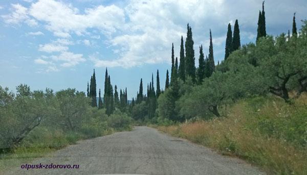 Кипарисы вдоль дороги на Пелопоннесе. Греция
