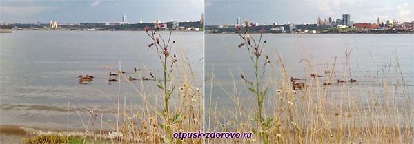 Утки на реке Казанке в Казани