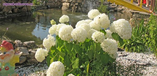 Цветы на территории Туган Авылым, Казань