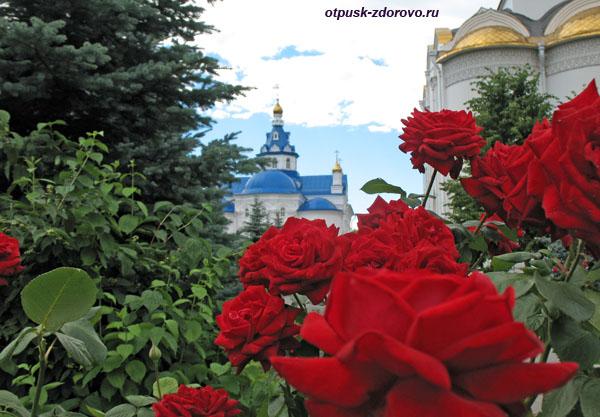 Розы на территории Свято-Успенского Зилантова монастыря в Казани