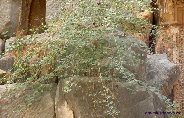 Амфитеатр в Турции или древний Колизей в Демре, цветы на камнях