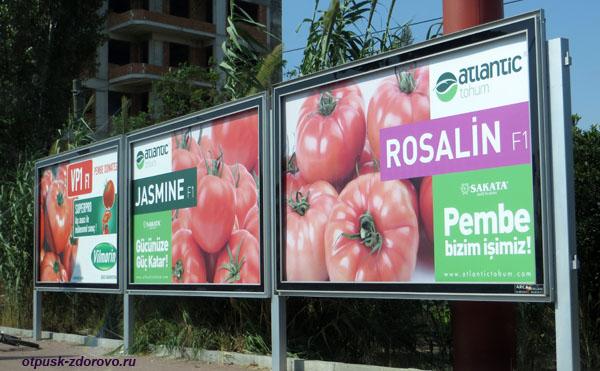 Реклама помидоров (рекламные щиты) в Демре, Турция