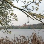Парки Несвижского замка или природная красота, созданная человеком