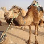 Отдых в Тунисе. 11 – 23 мая 2013 года