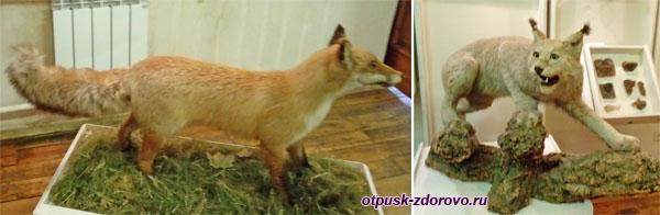 Лиса и рысь, Рыбинский музей-заповедник