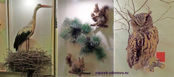 Аист, белка, филин, Рыбинский музей-заповедник