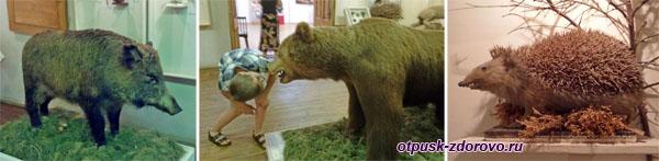 Кабан, медведь, еж, Рыбинский музей-заповедник
