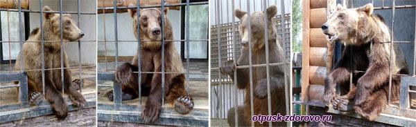 Медведи попрошайничают сладости, Музей баклуши и библиотека варенья в Семибратово