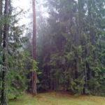 А что располагается в глубине заповедных лесов Беловежской пущи