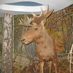 Музей заповедной природы в Беловежской Пуще
